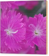 Pink Flower Closeup Wood Print