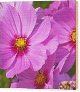 Pink Flower Conspirisy Wood Print