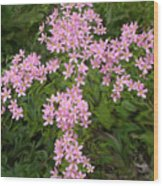 Pink Flower Cross Wood Print