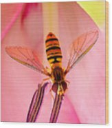 Pink Flower Fly Wood Print