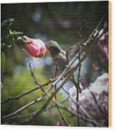 Pink Flower Hummie Wood Print