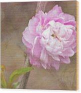 Dwarf Flowering Almond Romantic Floral Wood Print