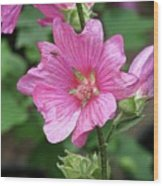 Pink Flower With Bug. Wood Print
