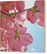 Pink Flowering Dogwood Tree Art Prints Blue Sky Baslee Troutman Wood Print
