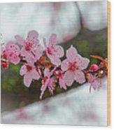 Pink Flowering Tree - Crabapple With Drops Wood Print