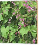 Pink Flowering Vine1 Wood Print