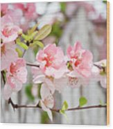 Pink Flowers And A White Picket Fence Wood Print