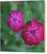 Pink Flowers II Wood Print