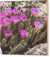 Pink Flowers In The Desert Wood Print