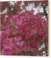 Pink Flowers On Blooming Tree Wood Print