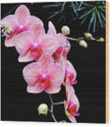 Pink Flowers Pink Vein Black Background Wood Print