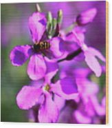 Pink Flowers With Bee . 40d4803 Wood Print