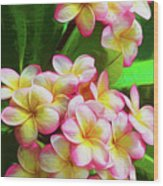 Pink Frangipani Wood Print
