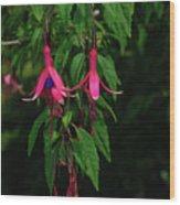 Pink Fushia Wood Print