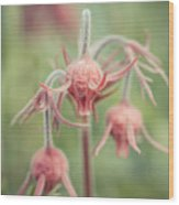 Pink Fuzz 2 Wood Print