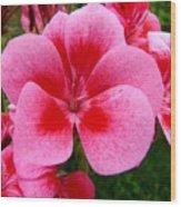Pink Geranium Blossom Wood Print