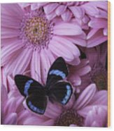 Pink Gerbera Daises And Butterfly Wood Print