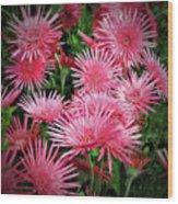 Pink Gerbera Heaven Wood Print