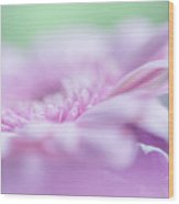 Pink Gerbera Macro 3. Pink Temptation Wood Print