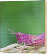 Pink Grasshopper Wood Print