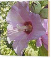 Pink Hawaiian Flowers Wood Print