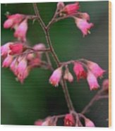 Pink Heuchera Flower 1 Wood Print