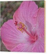 Pink Hibiscus Wood Print