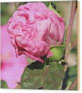 Pink Hibiscus Bud Wood Print