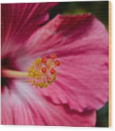 Pink Hibiscus Close-up Wood Print