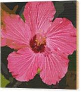 Pink Hibiscus Wood Print by Kimberly Camacho