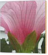 Pink Hibiscus Ready To Bloom Wood Print