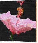 Pink Hibiscus With Curlicue Effect Wood Print