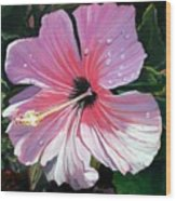 Pink Hibiscus With Raindrops Wood Print