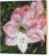 Pink Hippeastrum 01 Wood Print