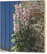 Pink Hollyhocks Growing From A Crack In The Pavement Wood Print