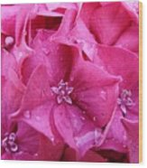 Pink Hydrangea After Rain Wood Print