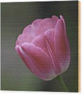 Pink Impression Squared 1 Wood Print