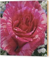Pink Intuition Rose Wood Print