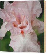 Pink Iris Study 15 Wood Print