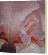 Pink Iris Study 5 Wood Print