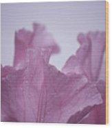 Pink Iris Study 8 Wood Print