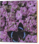 Pink Kalanchoe And Black Butterfly Wood Print