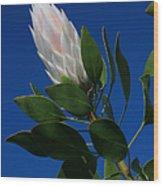 Pink King Protea Kula Maui Hawaii Wood Print
