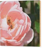Pink Lady - Rose Wood Print