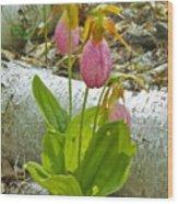 Pink Lady Slipper Wood Print
