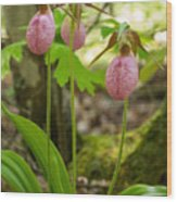 Pink Ladyslippers Wood Print