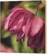 Pink Lampshade Wood Print