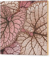 Pink Leaves Wood Print
