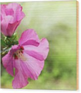 Pink Light Rose Of Sharon 2016 Wood Print