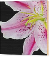 Pink Lilly 2 Wood Print